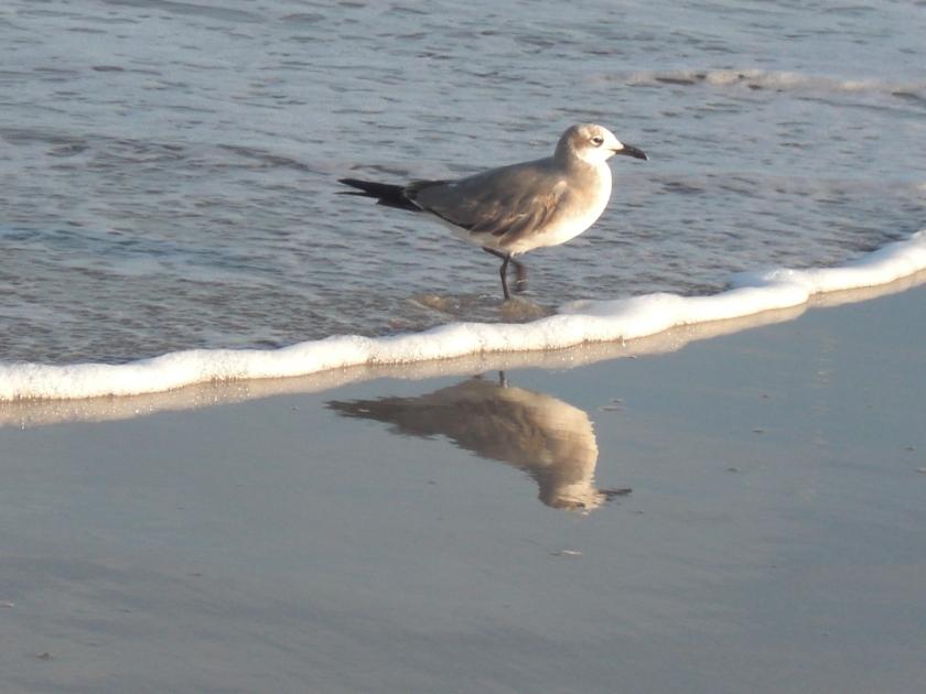 birdbeach7