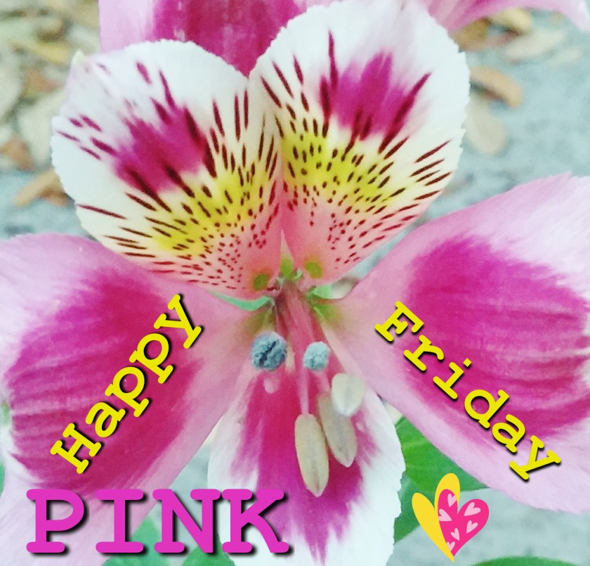 pinkfriday3