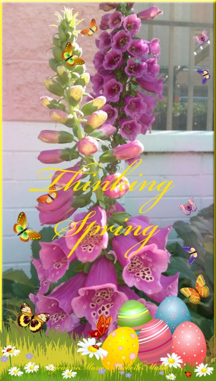 thinkingspring