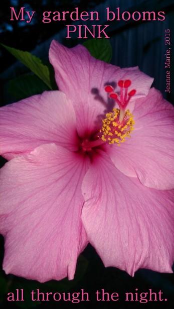 bloomspink