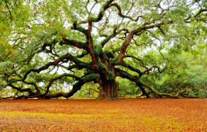 the-angel-oak-tree-charleston-mark-requidan