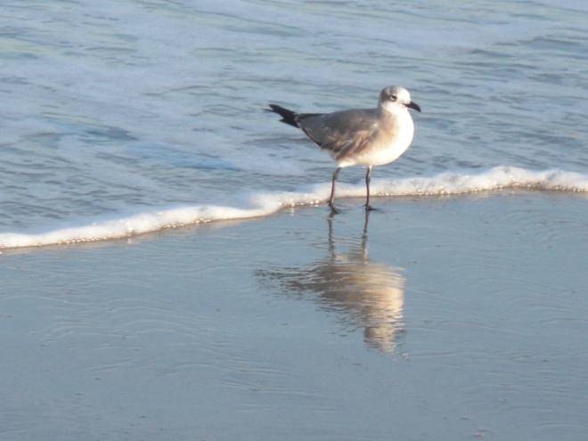 birdbeach5
